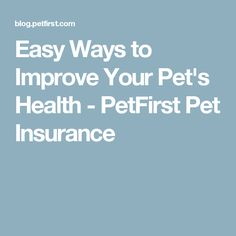 Easy Ways to Improve Your Pet's Health - PetFirst Pet Insurance