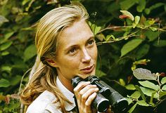 Jane Goodall broke down nearly every paradigm about what constitutes a human. Through her studies of chimpanzees at Gombe, she discovered that chimpanzees use tools, often eat meat, and have unimaginably complex social interactions - just like us. She observed chimpanzees inventing and innovating. She witnessed their curiosity first-hand. Throughout her career, she was repeatedly accused of attributing human behavior to animals, which were expected to act like machines - but time and time…