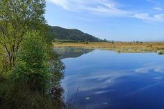 Reflections in a pool on the Cors Caron Nature Reserve