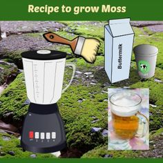 RecipetoGrowMoss-thehypertufagardener
