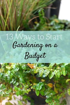 Gardening doesn't have to be expensive. Learn how to garden on a budget and buy plants without breaking the bank.