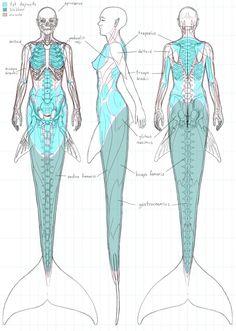 Musculature of a mermaid