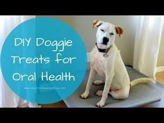 DO NOT USE ON CATS - some can be fatal to cats, especially tea tree oil. 6 Natural Recipes to Support Your Dog's Health Essential Oils Dogs, Essential Oil Blends, Young Living Oils, Young Living Essential Oils, Diy Dog Shampoo, Tea Tree Oil For Acne, Coconut Oil For Dogs, Oils For Dogs, Anatole France