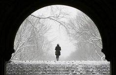 living snowglobe