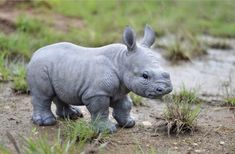 Hi-Line Gift Ltd. Baby Rhino Figurine Hi-Line Gift Ltd. Baby Rhino Figurine brings the beauty of an exotic animal sanctuary home. Made with polyresin, it is perfect for indoor and outdoor decor. Baby Animals Super Cute, Cute Little Animals, Cute Funny Animals, Cutest Animals, Baby Exotic Animals, Unusual Animals, Bizarre Animals, Baby Animals Pictures, Cute Animal Pictures