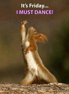happy friday meme, funny friday humor, happy f Animal Pictures, Funny Pictures, Squirrel Pictures, Funny Pics, Animals Photos, Dance Pictures, Sports Pictures, Videos Funny, Funny Images