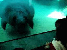 New trending GIF on Giphy. animals fail animal fail manatee. Follow Me CooliPhone6Case on Twitter Facebook Google Instagram LinkedIn Blogger Tumblr Youtube