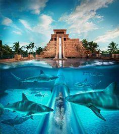 Templo Maya en Bahamas. Turismo con Tiburones @alvarodabril