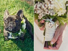 that's it. i'm having a french bulldog at my wedding somehow.