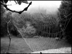 Spider's Web | Flickr - Photo Sharing!