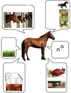 Све о животињама у сликама - Zelena učionica
