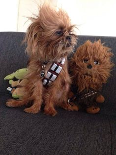 Adorable Dog Dressed Up as Chewbacca Wins Third Place in Petco México's 'Star Wars' Photo Contest