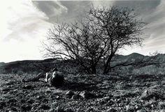 Debranne Cingari, Fallen with Exhaustion, Ed. 1/10, 2001, silver gelatin photograph, 20 X 30 inches