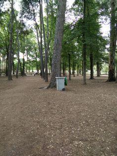 Parque municipal de lliria (valencia)Concienciar a los alumnos de la importancia de respetar el medio ambiente.