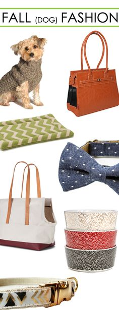 Be Fall-ready with Felix Chien's designer dog beds, apparel, carriers and more!