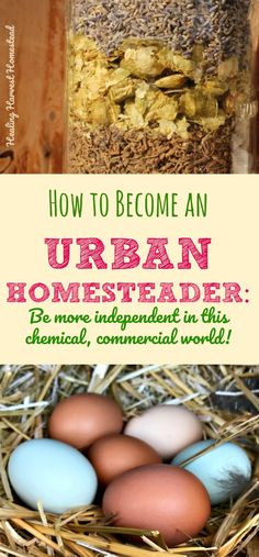 What is Urban Homesteading? Can you homestead in the city? Here are ways you can become more independent and self-sufficient, even in the city. Find out how to become self-reliant in this commercial, chemical world. How to become prepared for disasters with skills!