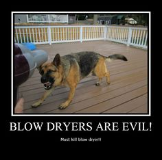 funny german shepherd pictures with captions | Location ...