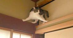 ネコがあきらめた瞬間!