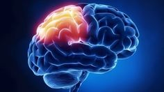 brain istock