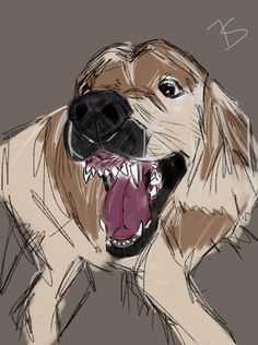 My dog Bilbo #sketch #drawing #dog