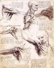 LEONARDO DA VINCI SKETCH PAINTING HUMAN MUSCLES & TENDONS REAL CANVASART PRINT