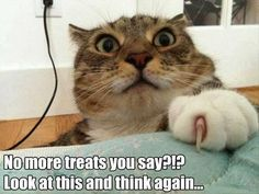 Funny animal pictures of the day - 24 pics memes animales, animales lindos, Funny Animal Memes, Cute Funny Animals, Funny Cute, Cute Cats, Funny Memes, Hilarious, Funny Cat Photos, Funny Animal Pictures, Animal Pics