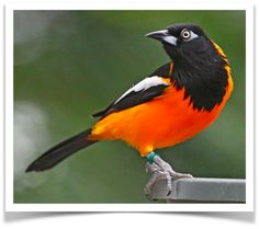 82 Best Pet Birds For Sale images in 2017 | Birds for sale