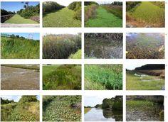 Resultado de imagem para excessive growth of aquatic macrophytes c