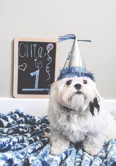 Dogs first birthday photoshoot