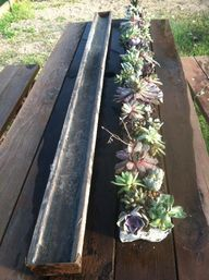 succulents in vintage gutters.  dying to do this!