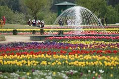 The colorful tulips lifts up the spirit :)