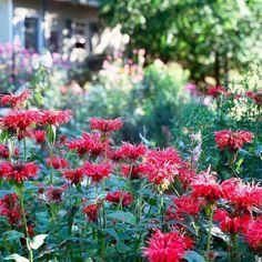 Outstanding Beautiful Fall Flowers To Plant In Your Garden: 78+ Best Fall Flower Ideas https://decoor.net/beautiful-fall-flowers-to-plant-in-your-garden-78-best-fall-flower-ideas-6349/