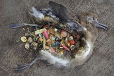 BioOrbis: Estômagos de plástico