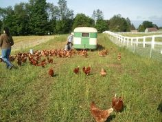 5 Ways Beginning Farmers Can Get Started NOW  - To Be A Farmer - Little Seed Farm