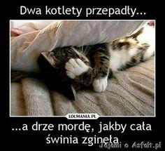 Wtf Funny, Funny Cute, Funny Memes, Hilarious, Polish Memes, Dark Sense Of Humor, Weekend Humor, Happy Photos, Good Jokes