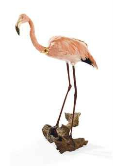 A TAXIDERMY SOUTH AFRICAN FLAMINGO (PHOENICOPTERUS ROSEUS) | EARLY 20TH CENTURY | Private Collections & Country House Sales Auction, Christie's, Aynhoe Park, 9 October 2012.