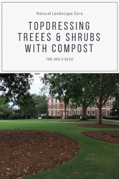 How To Use Compost To Topdress Trees And Shrubs In Your Landscape