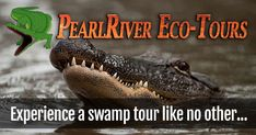 Journey with Pearl River Eco Tours as we guide you through the untouched wilderness and pristine beauty of the Honey Island Swamp. Jean Lafitte, Spring Break Trips, Pearl River, Buried Treasure, Boat Tours, Long Beach, Mississippi, New Orleans, Honey