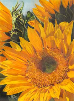 sunflower  Dianna Wallace Soissons