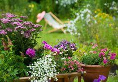 Ob und wann eine Blume blüht, hängt nicht nur von idealen Wetter- und Standortbedingungen, sondern vor allem vom Lebensrhythmus der Pflanze ab.