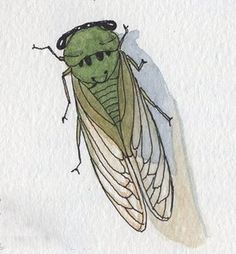 Father Goose Books: Why The Cicada Sings Cicada Tattoo, Insect Tattoo, Mantis Tattoo, Bug Tattoo, Tattoo Design Drawings, Art Drawings, Father Goose, Art Stand, Bug Art