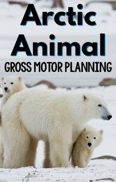 Arctic Animal activities that promote gross motor! Fun arctic animal gross motor games and activities perfect for an arctic animal unit, week, or to use in the winter! Eyfs Activities, Gross Motor Activities, Animal Activities, Polar Bear Games, Penguins And Polar Bears, Lesson Plans For Toddlers, Preschool Lesson Plans, Preschool Class, Preschool Ideas