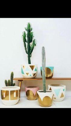 Cactus & golden pots