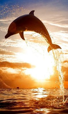beautiful picture of a dolphin jumping out of the water, the ray of sunlight really effects the picture in a good and magnifiesent way