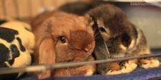 www.rabbitholehay.com Your quality fresh rabbit hay provider :)