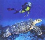 Ancianos viajeros  Las tortugas marinas seguramente son los animales más longevos del planeta. Algunas especies llegan a alcanzar los 180 años de edad.