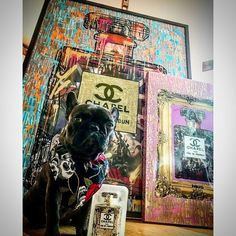 """191 Likes, 9 Comments - Endless (@endlessartist) on Instagram: """"@mynameisboo1 hanging at the Chapel #mynameisboo #heyboo #chapel #perfume #frenchbulldog #frenchie…"""""""