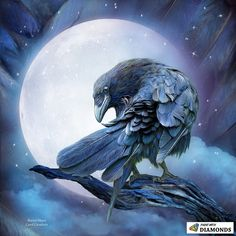 Shop for raven art from the world's greatest living artists. All raven artwork ships within 48 hours and includes a money-back guarantee. Choose your favorite raven designs and purchase them as wall art, home decor, phone cases, tote bags, and more! The Raven, Raven Bird, Crow Or Raven, Crow Art, Bird Art, Rabe Tattoo, Crows Ravens, Illustration, Mundo Animal