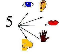 5 Senses Worksheet, Diy Scarf, Worksheets For Kids, Preschool, Playing Cards, Teaching, Human Body, School, Tela