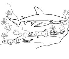 Sixgill Shark Coloring Page Educationcom Sharks Pinterest